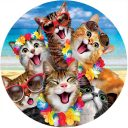 Beach Kittens Decorative Accent Magnet